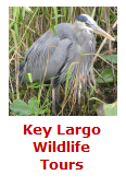 Click Here For Key Largo Wildlife Tours