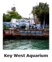 Click Here For More On The Key West Aquarium