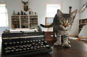 Ernests Ssix toed cats
