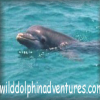 Click Here For More On Wild Dolphin Adventures Dolphin Tours