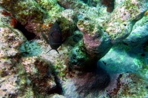 Florida Keys Marine Sanctuary