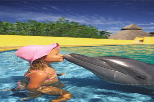 Dolphin Eco Tours