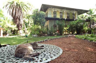 Polydactyl Cat In Hemingway Home
